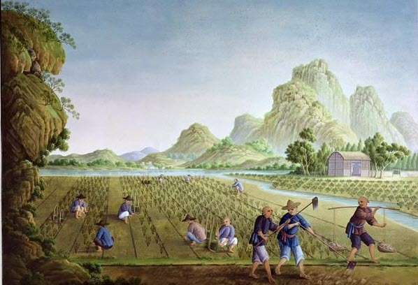 rice cultivation in ancient China