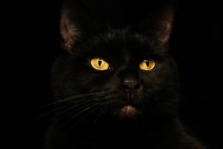 chat noir superstition malefiques