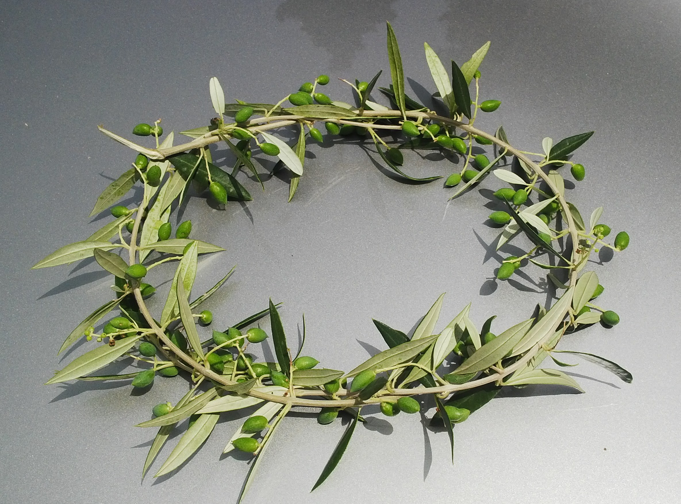 couronne feuille d'olivier