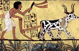 Chambre funéraire de Sennedjem, Scène : Fermier en train de labourer. Vers 1200 avant J.C.
